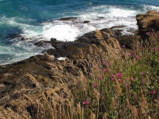 Mendocino Coastliine