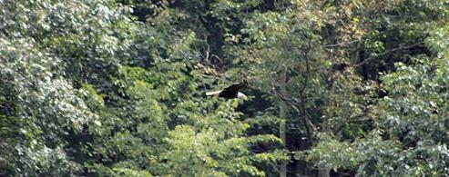 Potomac Eagle train18