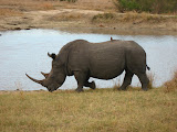 South Africa - 484.jpg