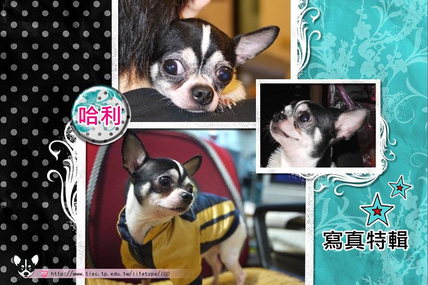 201007minibook-dog01.jpg