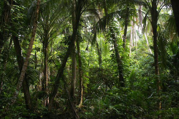 Dans la forêt. Pulau Mantanani (Sabah, Malaisie) 28 juillet 2011. Photo : J.-M. Gayman