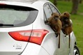 Hyundai-i30-Monkeys-1