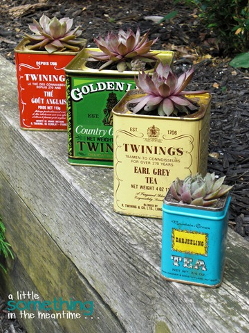 Tea Tin Planters After 1