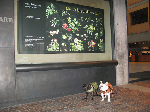 Martha wanted to see an exhibit called 'Mrs. Delany and her Circle.'  Since dogs aren't allowed in the museum, Uncle Carlos said he would take us on our own little adventure.