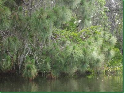 South Creek Kayak & Casey Key Beach 007