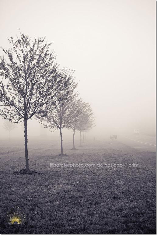 fog-5441