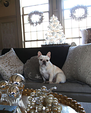 Here is Sharkey sitting among all of Martha's silver decor.  So pretty!(marthastewart.com)