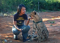 Cheetahs purr like engines.