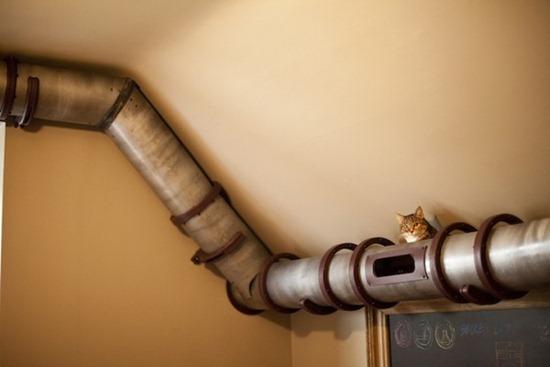 Trânsito de gatos 04