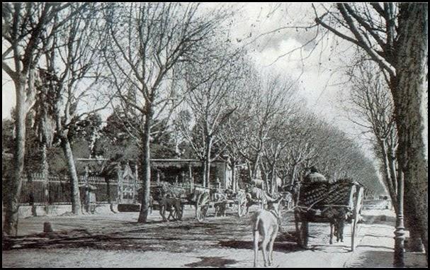VIA DE CARROS Camino del Grao (actual Avda. del Puerto). 1930. colección Juanjo Sagi.