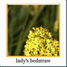 lbedstraw