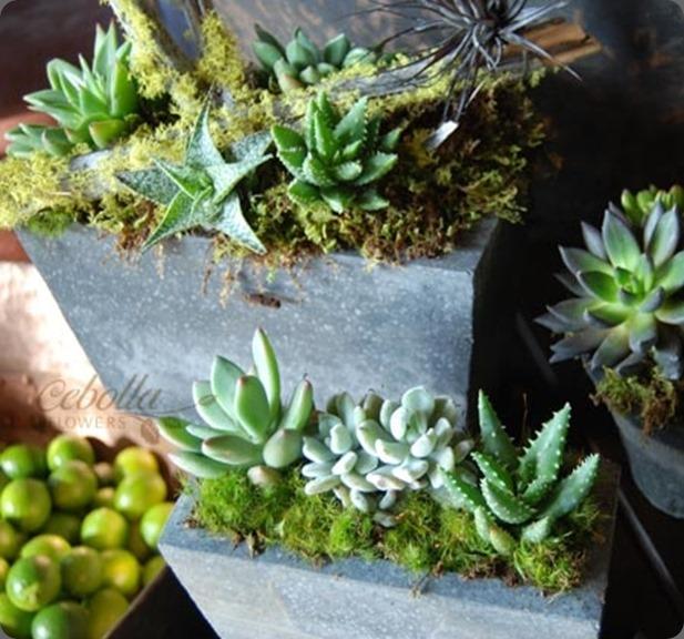 succulentrect-detail l cebolla fine flowers