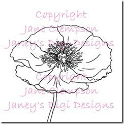 Icelandic Poppy - Watermarked - Blog