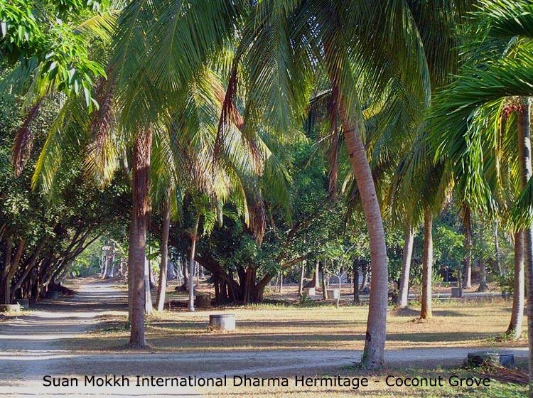du-lich-thai-lan-tu-vien-Suan-Mokkh (10)
