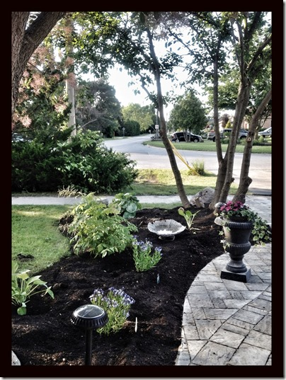 front walk planting