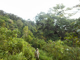 Entering the forest on Gunung Ranai (Dan Quinn, September 2013)