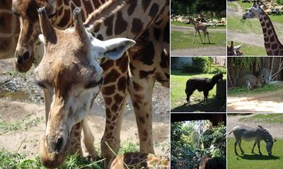 Zoo Leipzig anzeigen