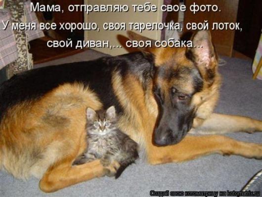 1343937764_Kotomatrica-svezhak-14-foto_11