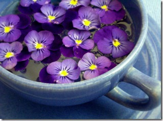 Illinois-State-Flower-Pictures-The-Violet0