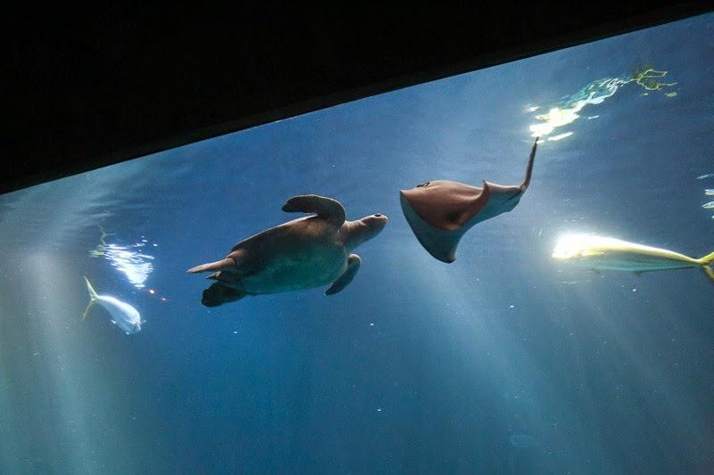 aquarium-25