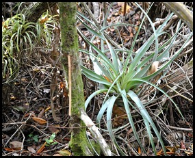 06e2 - West Lake Trail - Bromelaide