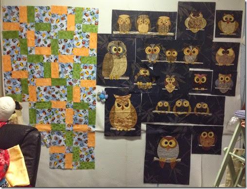 owls a plenty