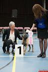 20130511-BMCN-Bullmastiff-Championship-Clubmatch-2392.jpg