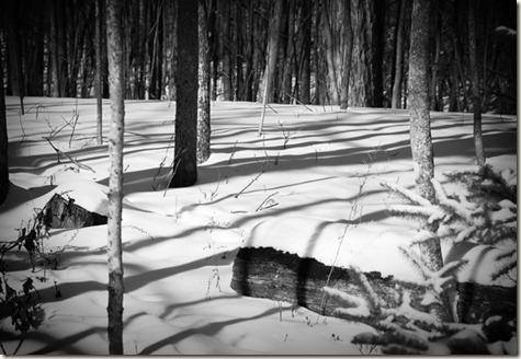 BW-Woods