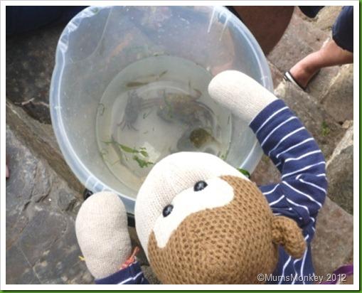 Crabbing in Brixham.