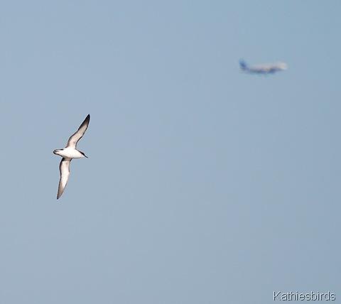 4. bird plane-kab