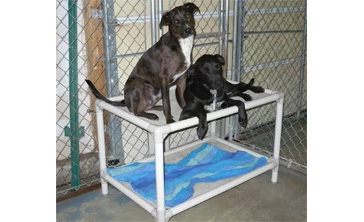 Check with your local shelter to see if they need beds, and if they are signed up for this program.