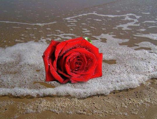 rosa-vermelha-no-mar