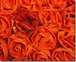 Pumpkin Roses 3