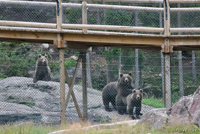 Bjørneparken 096