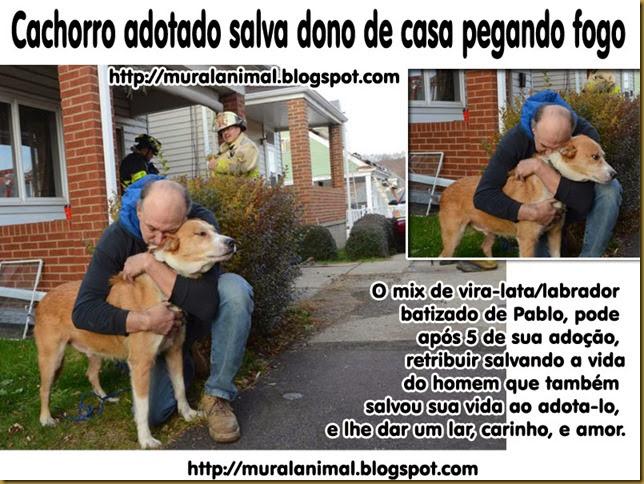 cachorro-adotado-salva-fogo