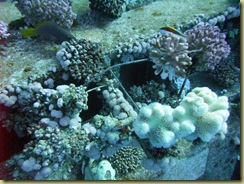Coral everywhere