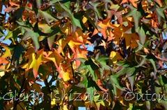 33 - Glória Ishizaka - Folhas de Outono