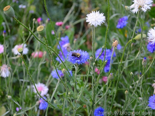 bees on wildflowers