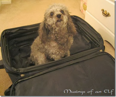 Navi in Suitcase