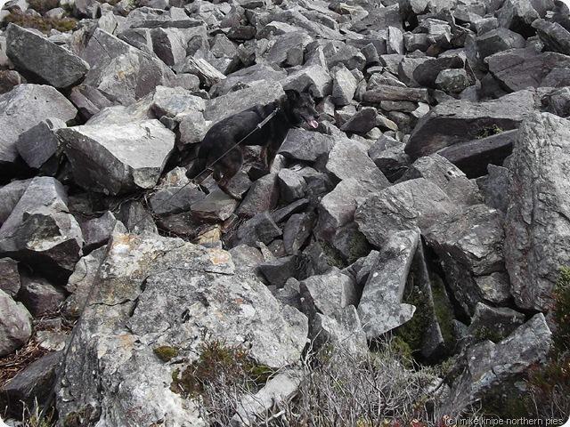 rocky bits...
