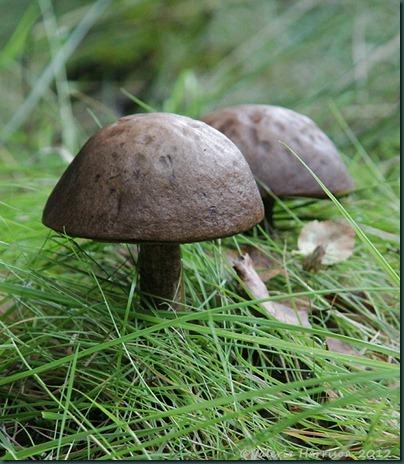 16-toadstools