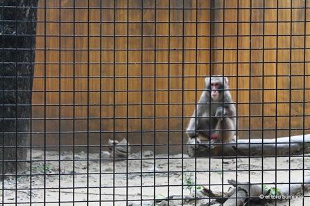 manila zoo 24