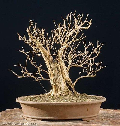 bonsais arvores em miniatura desbaratinando (77)