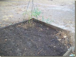 fall garden planted 003