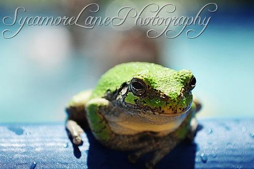 tree frog-w