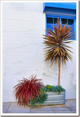 140324_Monterey_0075