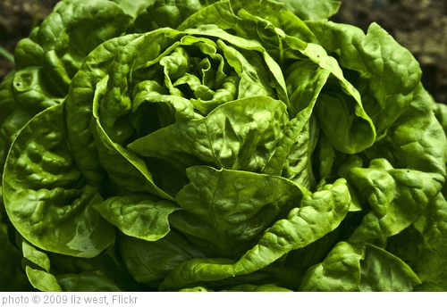 'lettuce' photo (c) 2009, liz west - license: http://creativecommons.org/licenses/by/2.0/