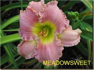 MEADOWSWEET_f