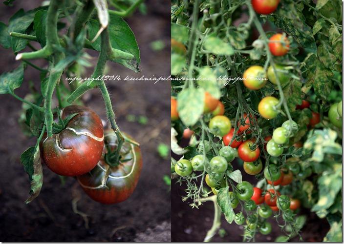 Pomidory mojej mamy i tarta z pomidorami  w wersji klasycznej i bezglutenowej2