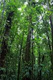 The Towering Rainforest - Roseau, Dominica